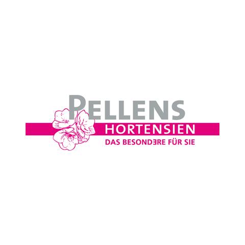 Pellens_Hortensien